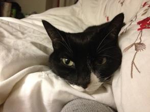 Ambridge the cat (2)