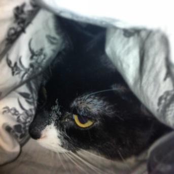 ambridge cat outside (4)