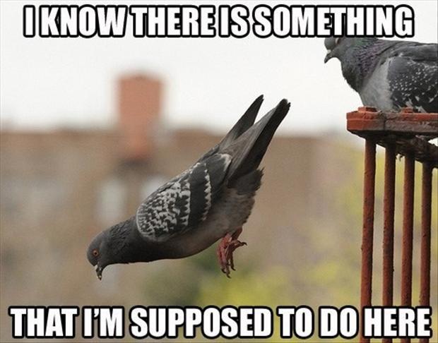 funny-birds