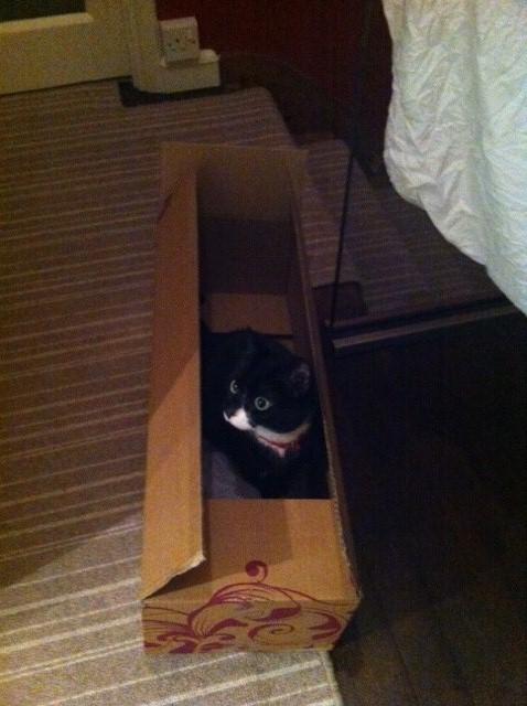 Ambridge the cat in her new box