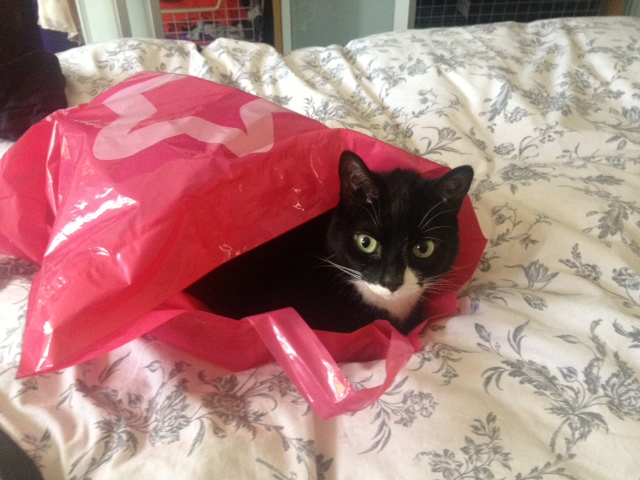 ambridge cat pink plastic bag