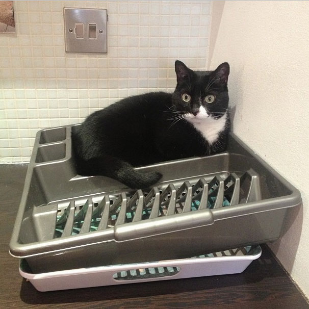 ambridge-cat-sink