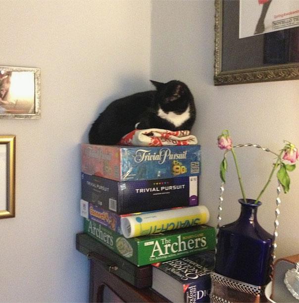 ambridge-cat-throne-of-games