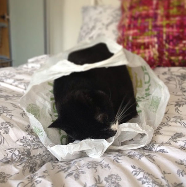 ambridge-cat-waitrose-bag