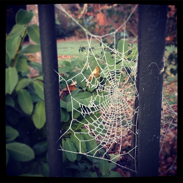 camberwell-frosted-spider-webs
