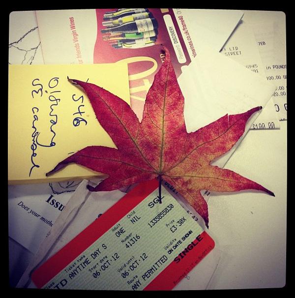 camberwell-japanese-maple-leaf