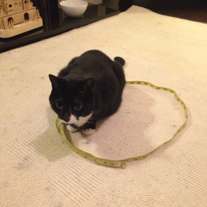 The circle trick (usual apologies for rug and requests for how to get out soot that small paws have trodden merrily through)