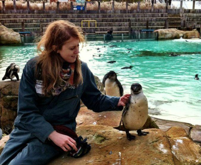penguin_londonzoo_kb